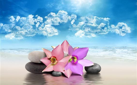 Papéis de Parede Flores cor de rosa, pedras, mar, praia, nuvens, sol