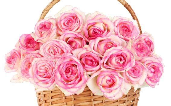 Fondos de pantalla Rosas rosadas, cesta, fondo blanco.