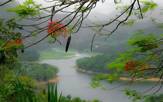 Papéis de Parede Porto Rico, flores, galho de árvore, montanhas, rio, nevoeiro