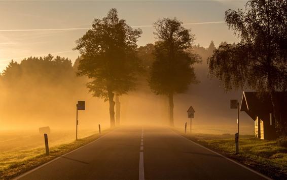 Papéis de Parede Estrada, árvores, nevoeiro, manhã, campo