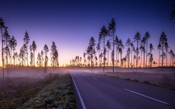 Papéis de Parede Estrada, árvores, nevoeiro, céu, manhã