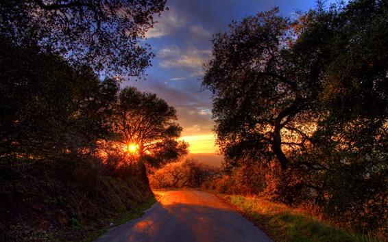 Papéis de Parede Estrada, árvores, pôr do sol, sombra