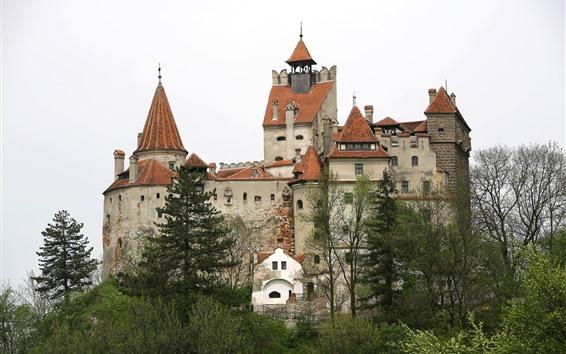 Обои Румыния, Замок Бран, деревья
