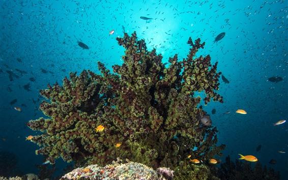 Обои Море, подводный мир, коралл, рыба
