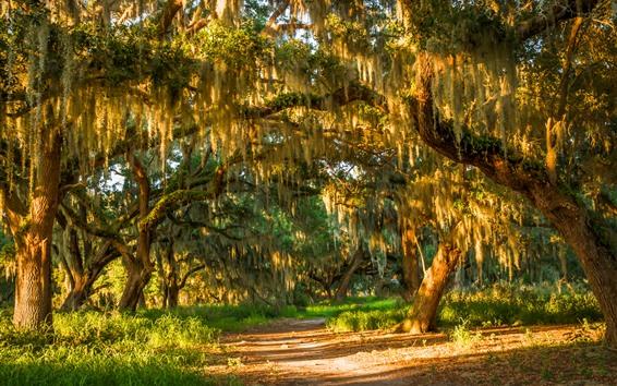Обои Лето, деревья, трава, лес, солнечный свет
