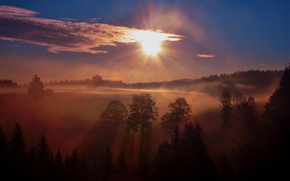 Fondos de pantalla Amanecer, Árboles, Niebla, Mañana, Paisaje de la naturaleza