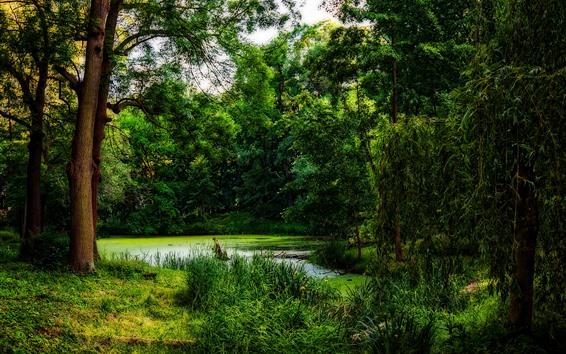 배경 화면 나무, 초록, 연못, 자연 경관