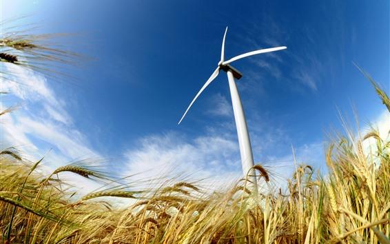 Fondos de pantalla Campo de trigo, molino de viento, cielo azul