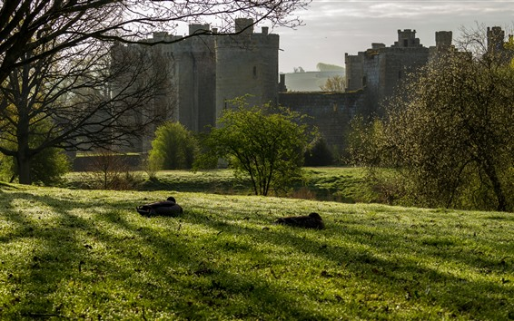 Papéis de Parede Castelo de Bodiam, Inglaterra, grama, árvores, patos, luz do sol
