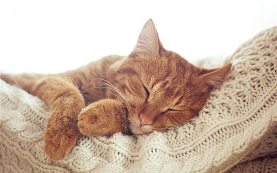 Fond d'écran Chat dormant, patte