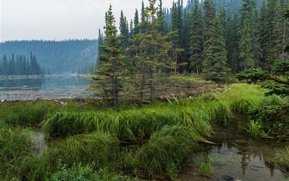 Обои Национальный парк Денали, озеро подковы, лес, деревья, США