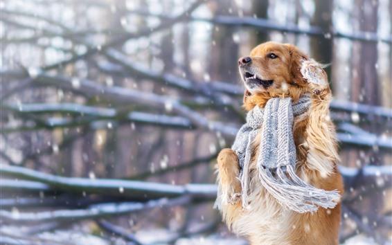 배경 화면 개, 스카프, 눈, 겨울