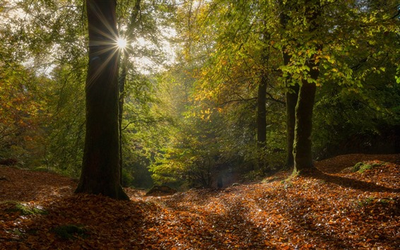 Wallpaper France, Brittany, trees, forest, autumn, leaves, sun rays