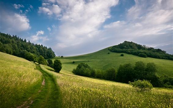 壁紙 グリーンフィールド、木、丘、雲