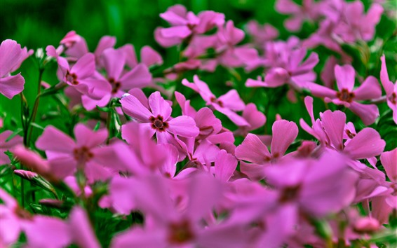 壁紙 ピンクの花、花びら