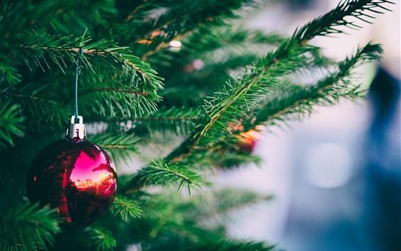 Обои Один красный рождественский шар, ель ветки, иглы