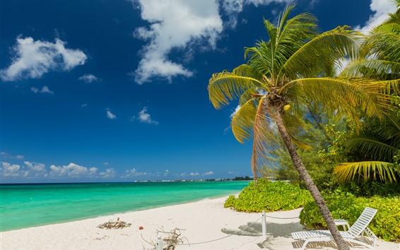 Fond d'écran Palmiers, plage, mer, nuages, tropical