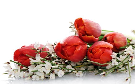 Fond d'écran Tulipes rouges, fleurs, bouquet, fond blanc