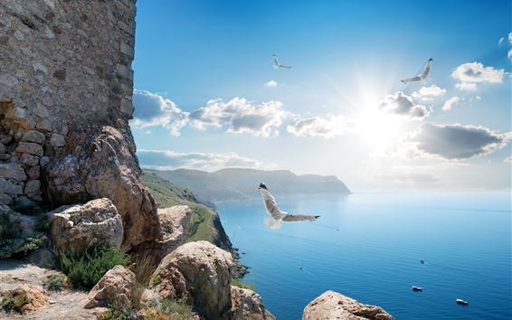 壁紙 ロシア、クリミア、カモメ、鳥、海、空、日光