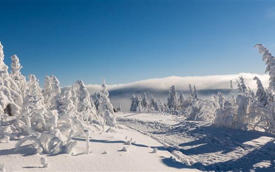 桌布 薩克森,德國,雪,冬天,樹木,道路,陰影