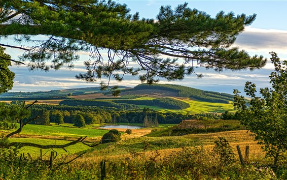 壁紙 スコットランド、木、茂み、牧草地、丘