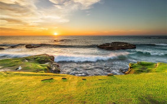 Fondos de pantalla Mar, costa, prado verde, gaviota, amanecer
