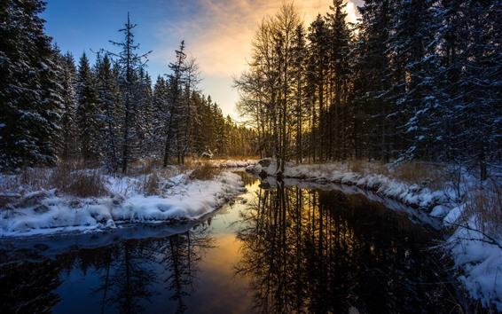 배경 화면 눈, 겨울, 숲, 나무, 강, 아침