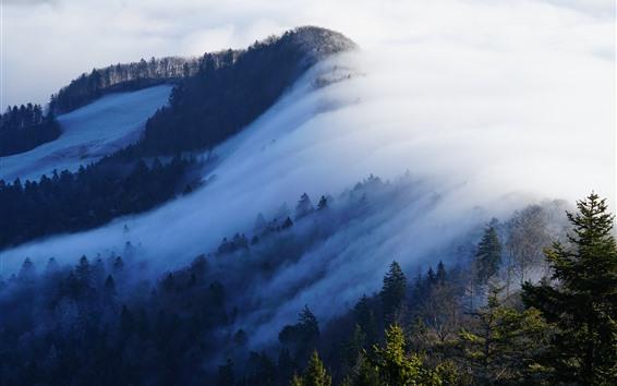 Fond d'écran Suisse, forêt, arbres, brouillard, matin