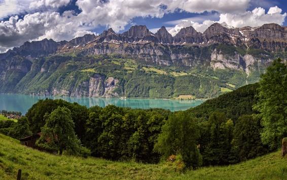 Fondos de pantalla Suiza, árboles, montañas, lago, hierba, vaca