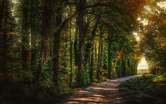 Papéis de Parede Árvores, beco, estrada, sol