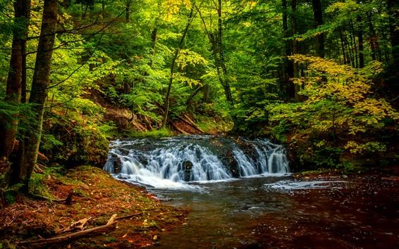 壁紙 木、森、滝、グリーン、クリーク
