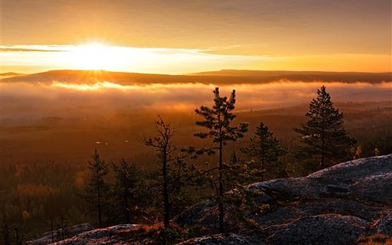 Wallpaper Trees, mountain top, sunrise, morning, fog