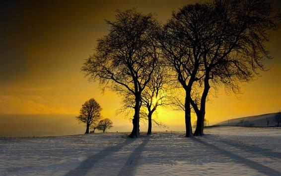 Wallpaper Winter, snow, trees, sunset, silhouette