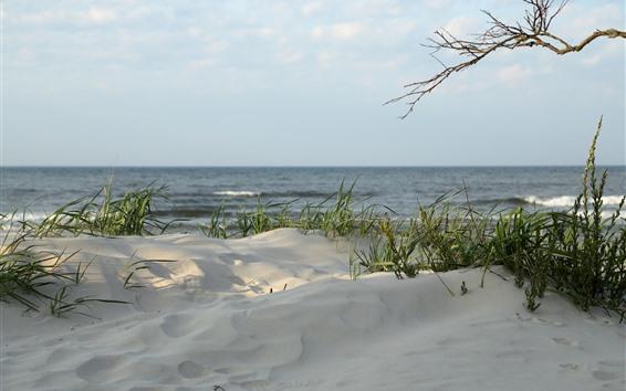 壁紙 ビーチ、草、砂、海