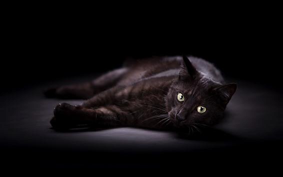 Fond d'écran Chat noir, repos, yeux jaunes, regarder