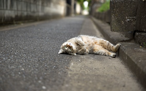 Wallpaper Cat lying on road
