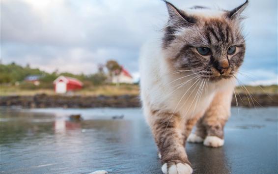 壁紙 猫歩く、正面図、顔、目