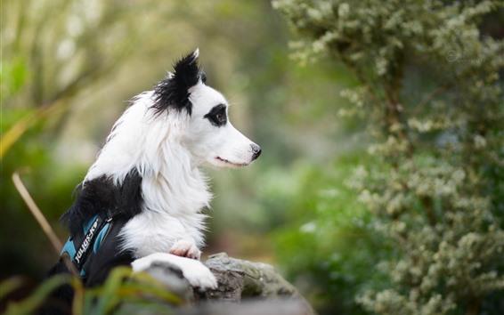 Papéis de Parede Cão, preto e branco, vista lateral, olhar