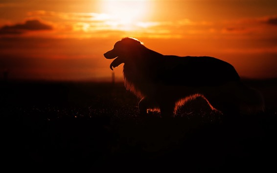 Wallpaper Dog, silhouette, sunset