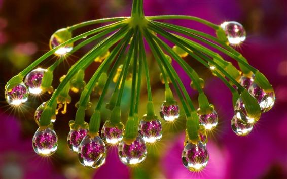壁紙 花、水滴、グレア