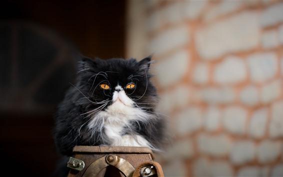壁紙 毛皮のような子猫、黒と白、猫、黄色の目、見て