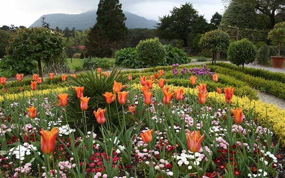 Wallpaper Garden, tulips, flowers, trees