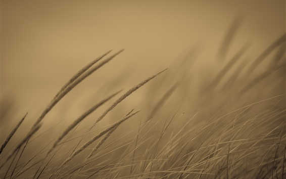 Wallpaper Grass, hazy background, dusk