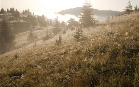 Papéis de Parede Grama, árvores, nevoeiro, manhã, luz do sol, paisagem da natureza