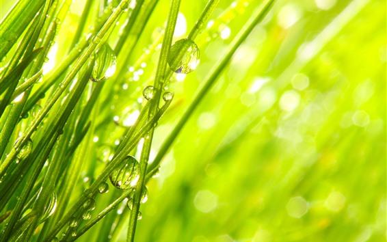 Fondos de pantalla Hierba verde, gotitas de agua, rocío, resplandor, verano