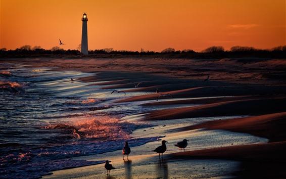 Wallpaper Lighthouse, birds, sea, sunset
