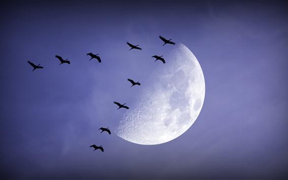 Fond d'écran Lune, oiseaux, nuit