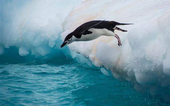 Wallpaper Penguin, jump, floe, ice, sea