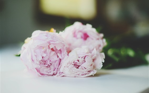 Wallpaper Pink peonies, flowers, bouquet, hazy