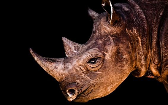 壁紙 Rhino、頭、ホーン、目、黒の背景